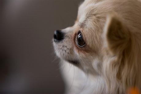 ペット葬儀で起こり得るトラブルに備えて【必ず電話 or 下見をする事】