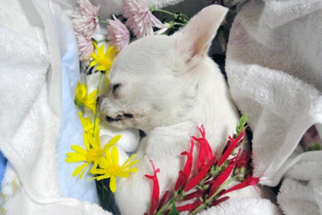 評判のよい愛知県のペット葬儀場所・火葬場7選 |  …
