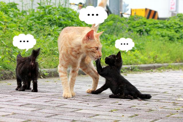 ペット葬儀社選びも口コミの時代へ