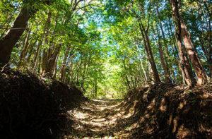 緑豊かな森の中で自然葬