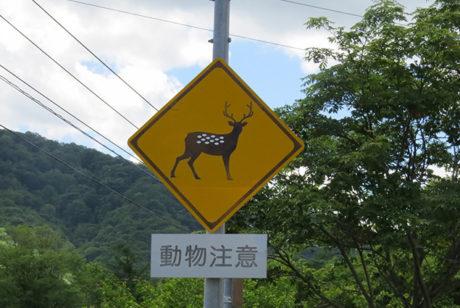 道路上で死んでしまった動物を見つけた時の対処法【道路緊急ダイヤル「#9910」】