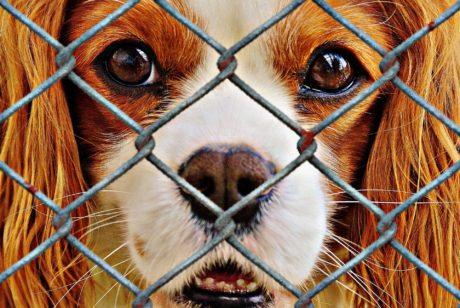 【寄付のお願い】不要になったペットの遺品(フード・トイレシーツ・猫砂等)は動物保護団体に寄付しましょう
