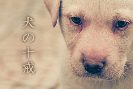 犬の十戒はペットを飼う前に読んでおくべき【裏犬の十戒も(笑)】