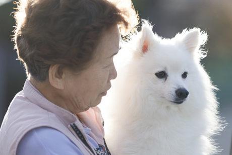 【ペットの高齢化を考える】老犬・老猫ホームという選択肢について