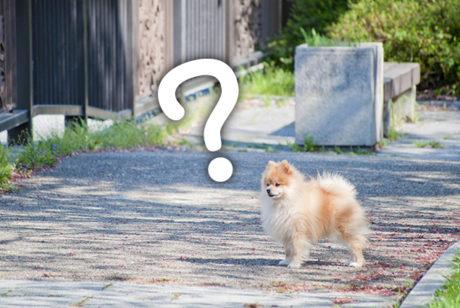 ペットが迷子になってしまったら?【迷子犬掲示板・ペット探偵・迷子保険】