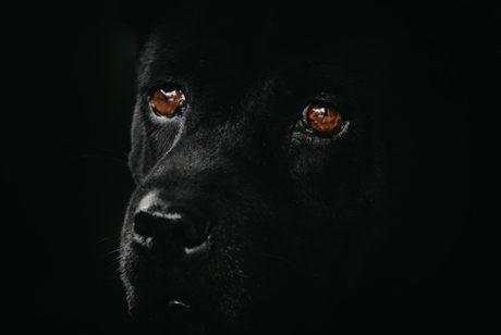 ペットショップで売れ残ってしまった犬・猫のその後【犬の引き取り屋とは?】