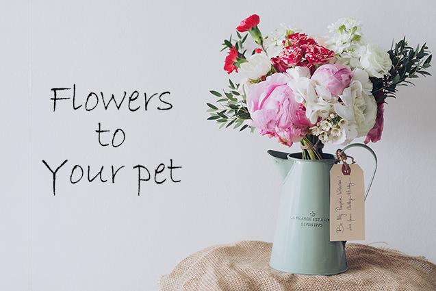 ペットが亡くなった時に送りたいお悔やみの花【おすすめのショップ3選】