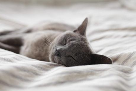 【お悩み解決】今朝猫が死んでしまったのですが、直ぐに火葬しなければいけませんか?