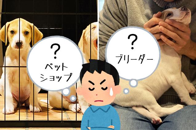 【犬・猫を買うならどっちが良いの?】ペットショップ or ブリーダー?