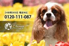 ペットの訪問火葬『ohana』東京支店