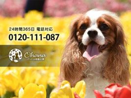 ペットの訪問火葬『ohana』千葉支店