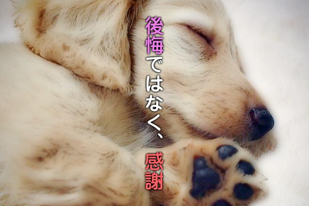 【ペットロス克服(軽減)方法】ペットが亡くなって辛い方は読んでみて下さい