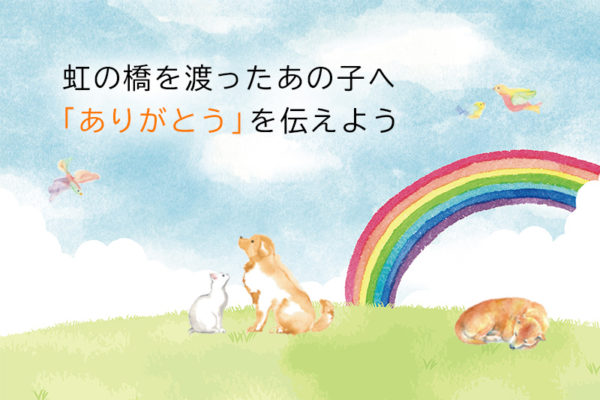 虹の橋を渡ったあの子へ【ペットロスから立ち直るために…】